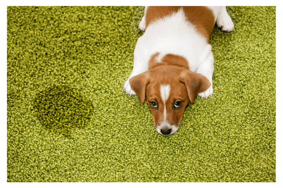 Carpet Cleaning Fond Du Lac Wi Nature S Care Chem Dry